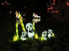 Magie des lanternes, Jardin botanique de Montréal, 2012 Aquarium, Gardens, Chinese Lanterns, Taper Candles, Goldfish Bowl, Fish Tank, Aquarius