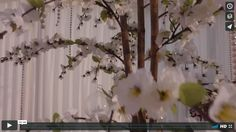Video, introducing one of our range of table centrepieces - the 'White Blossom Tree'.  Click link: http://ow.ly/1CKw30cgktt
