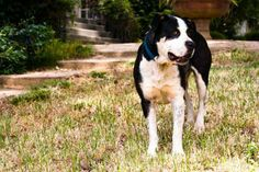 Plants That Repel Ticks & Fleas. Keep fleas and ticks out of your yard and away from your pets. Flea And Tick, Ticks, Dog Care, Fleas, Organic Gardening, Mammals, Outdoor Gardens, Fur Babies, Gardens