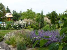 Kącik z trawami, kocimietką, lawendą białą i czyśćcem przywabia pszczoły i motyle. W tle białe piwonie i biały  krzew tawuły.
