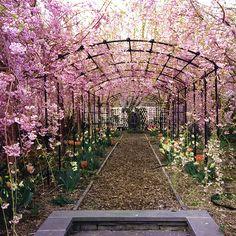 Pergola Garten Blauregen - Long Pergola Patio - Pergola Patio With Fan - - Pergola Shade Cloth - Pergola Terrasse Store