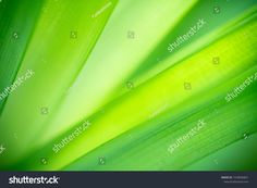 Closeup nature view of green leaf on blurred greenery background in garden with copy space using as background natural green plants landscape, ecology, fresh wallpaper concept. Greenery Background, Green Leaf Background, Nature Green, Nature View, Green Plants, Ecology, Green Leaves, Close Up, Photo Editing