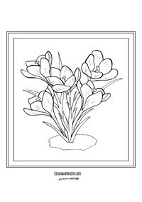 Krokusky - jarné kvietky Spring Theme, Small World, Diy Projects To Try, Coloring Pages, Embroidery, Knitting, Design, Grey Trench Coat, Drawings