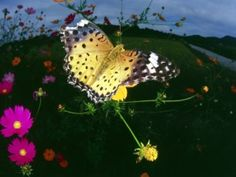 Butterfly With Flowers