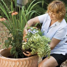 how to pick the right plants for container growing