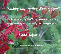 Autumn, Decor, Decoration, Fall Season, Fall, Decorating, Deco