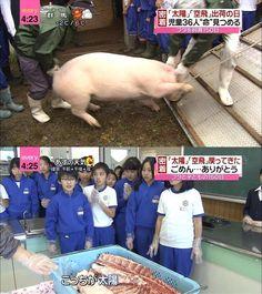【悲報】150日間自分達で育てた豚が肉になった瞬間を見たガキの顔wwwwwwwwwwwwww : 【2ch】ニュー速クオリティ