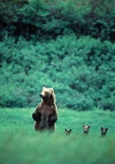 Momma bear and her 3 lil bears...So cute!