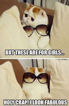 there should be more cats wearing sunglasses