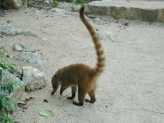 Adventure tourism in Mexico's Aktun Chen Park Chen, Tulum, Cancun, Mexico Tourism, People Fall In Love, Natural Park, Little Monkeys, Riviera Maya, Exotic Pets
