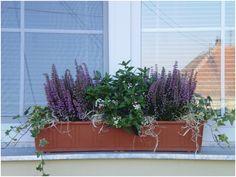 Autumn, Fall, Safari, Plants, House, Gardening, Decoration, Decor, Fall Season