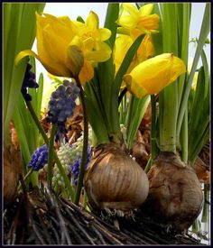 florystyka-wiosna-2012.jpg (685×800)