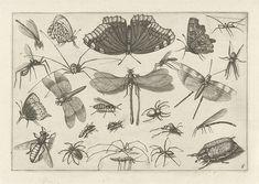 Insecten, Jacob Hoefnagel, 1630
