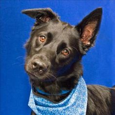 Will you love me? #Adopt Logan at the MHS Berman Center for Animal Care in Westland!