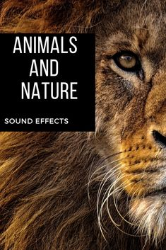 A Big Variety of Animals and Nature sound effects perfect for videos,apps,games or meditation ambient. sound effects Nature Sounds, Sound Design, Sound Effects, Meditation, Commercial, Apps, Birds, Videos, Beach