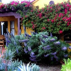 Los Angeles Mediterranean Home Stucco House Design Ideas, Pictures, Remodel, and Decor - page 7