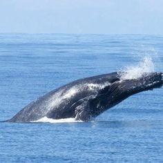 Whale watching. Monterey Bay CA Zippertravel.com Digital Edition