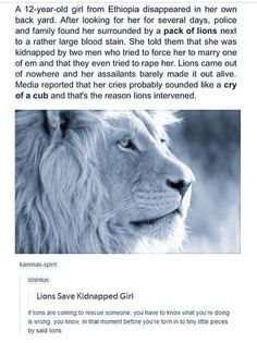 Lion saves kidnapped girl - - More memes, funny videos and pics on Funny Memes, Hilarious, Funny Videos, Angst Quotes, Kidnapped Girl, Funny Animals, Cute Animals, Amazing Animals, Cute Stories