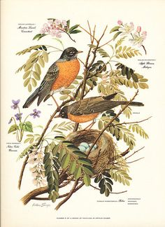 Robins remind me of my childhood and the excitement of change of seasons.