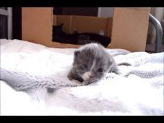 Kitty can't keep her head up Kittens, Cats, Nova, Animals, Gatos, Animales, Kitty Cats, Animaux, Kitten