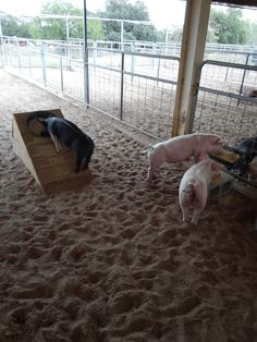 """My slant pig feeder worked so well I modified two other feeders I had by laying 2 cinder blocks side by side and raising there """"fence hung"""" feeders so the pigs have to stretch to eat."""