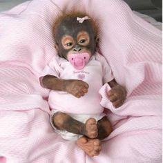 baby monkey - Google Search