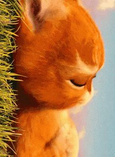The perfect GatoConBotas TeExtranoAmor TeExtranoMiAmor Animated GIF for your conversation. Discover and Share the best GIFs on Tenor. Cartoon Gifs, Cute Cartoon Wallpapers, Pet Loss Quotes, Beste Gif, Funny Animals, Cute Animals, Love Is Comic, Cute Love Gif, Cat Character