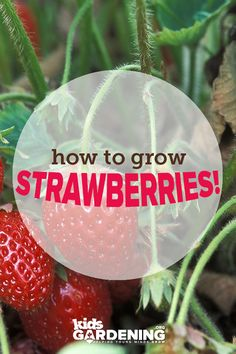 Growing Guide Garden guide: how to grow strawberriesGarden guide: how to grow strawberries Strawberry Plants, Grow Strawberries, Garden Guide, Garden Ideas, Beautiful Fruits, Food Decoration, Grow Your Own, Blog Tips, Vegetable Garden