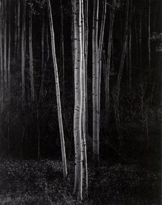 """Aspens"" (1958), by Ansel Adams"