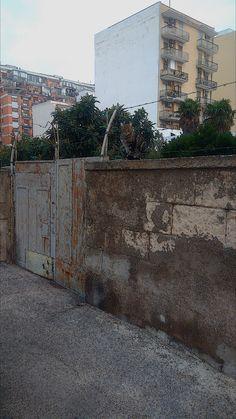 Hdr - Gatto sul cornicione del muro Foto Hdr, Sidewalk, Public, Fotografia, Side Walkway, Walkway, Walkways, Pavement
