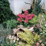 Krásna záhrada po celý rok 12