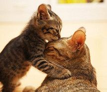 Mother's love #cat
