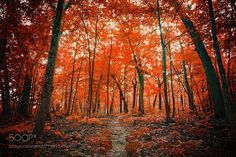 La Foresta Rossa by AnthonyPresley. @go4fotos