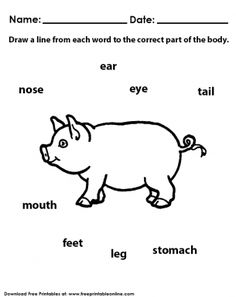 Parts Of The Body Animal Worksheet
