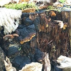 Black & orange fungus