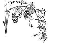 """Résultat de recherche d'images pour """"dessin vigne facile"""""""