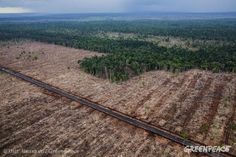 Tracking progress against deforestation - the Forest 500.