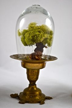 Tree terrarium beautiful real moss terrarium hand by UniqueLeeArt