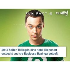 echt jetzt? #bazinga ?  #funfact #thebigbangtheory #tbbt #sheldoncooper #biene