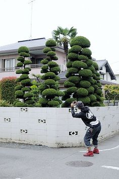 Topiary. i want those trees!