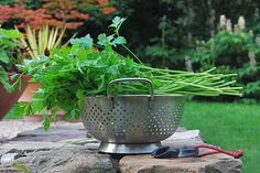 Preserving parsley in cubes or frozen in a log.  Works for chives, too.