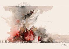 Rachel Walker — Water Dragon Watercolor Animals, Watercolor And Ink, Watercolor Paintings, Rachel Walker, Tiger Species, Ballet Posters, Nz Art, Water Dragon, Rare Animals