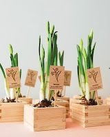 Spring bulbs make a nice wedding favor. You might also consider just placing the unopened bulbs in a nested box with a twine string to secure and from which you can attach your thank you tag.