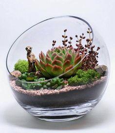 Meerkat terrarium with succulents and small ferns? Cactus Terrarium, Mini Terrarium, Garden Terrarium, Succulents In Containers, Cacti And Succulents, Planting Succulents, Decoration Plante, Dish Garden, Succulent Gardening