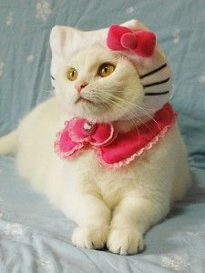 You would think you cannot be surprised by anything nowadays. Hello Kitty has conquered kids, adults, and its own race! It's like going full circle, Hello Kitty hats for kitties. Pet Halloween Costumes, Pet Costumes, Halloween Cat, Happy Halloween, Costume Ideas, Animal Costumes, Cute Cats, Funny Cats, Funny Animals