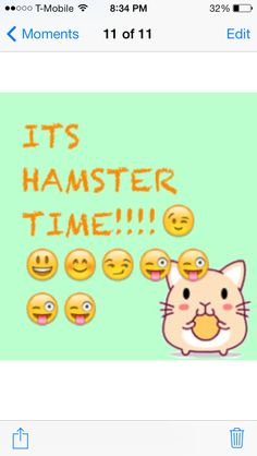 ITS HAMSTER TIME!!!!!
