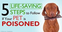 Here are five important tips for handling a pet poisoning emergency in your own household. http://healthypets.mercola.com/sites/healthypets/archive/2014/11/10/pet-poisoning-emergency.aspx