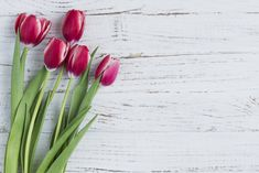 White wooden surface with tulips for mother's day Free Photo Red Tulips, Tulips Flowers, Flowers Nature, Planting Flowers, Beautiful Flowers, Flower Background Wallpaper, Flower Backgrounds, Wallpaper Backgrounds, Vintage Diy