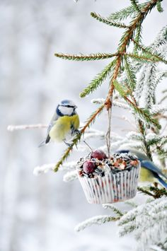 Januar kort oppsummert, ikkje so ille når ein ser det slik eigentleg. Animal Photography, Nature Photography, Wild Birds Unlimited, Bird Seed Ornaments, Outdoor Pictures, Diy Bird Feeder, Garden Animals, Winter Scenery, White Gardens
