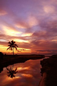 Reflection Of Sunset Palm Tree River Maui Hawaii by Pierre Leclerc Photography